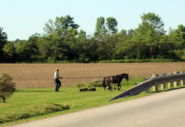 1 (13) газонокосилка в одну лошадиную силу